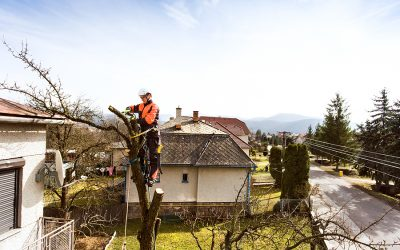 Trees and Your Roof: Spring Maintenance Before Summer Storms